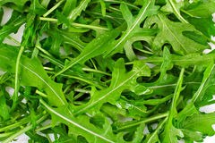Fresh Green Arugula. Studio Photo royalty free stock photography