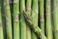 Fresh green asparagus macro raw. Food closeup Stock Images