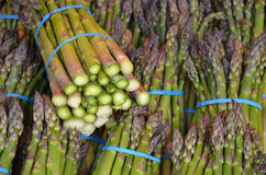 Fresh green asparagus at market Royalty Free Stock Photos