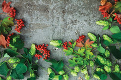 Fresh green autumn branches of hop and red berries of viburnum. On concrete background. Top view. Free space for your text Stock Photography