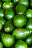 Fresh green avocado. Avocado background. Stock Photography