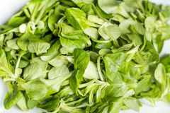 Fresh green baby spinach leaves Royalty Free Stock Photography