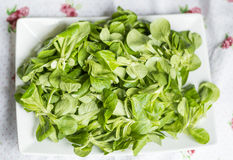 Fresh green baby spinach leaves Royalty Free Stock Image