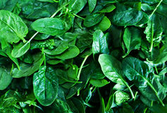 Fresh green baby spinach leaves background close up Stock Photography