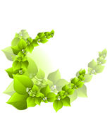 Fresh green background Royalty Free Stock Image