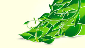 Fresh green background Royalty Free Stock Photo
