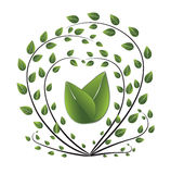 Fresh green background. Leaf tree. Vector. Illustration Royalty Free Stock Photography