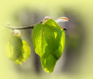 Fresh green Royalty Free Stock Images
