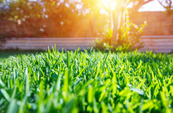 Fresh green backyard Royalty Free Stock Images