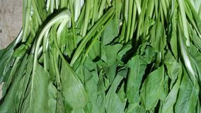 Fresh green bak choy or caisim. stock images