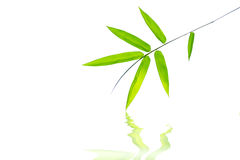 Fresh green bamboo leaf Royalty Free Stock Photo