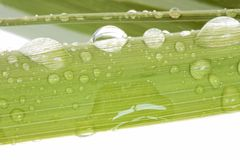 Fresh green bamboo macro Stock Image