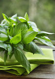Fresh green basil Stock Photos