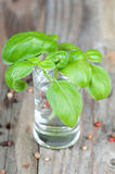 Fresh green basil Stock Photos