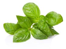 Fresh green basil herb leaves isolated on white background. Fresh green basil herb leaves isolated on a white background stock photos