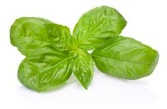 Fresh green basil herb leaves isolated on white background. Fresh green basil herb leaves isolated on a white background stock photo