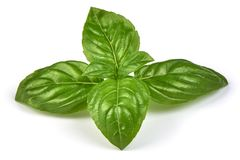 Fresh green basil herb leaves, isolated on white background. Sweet Genovese basil. Close-up. stock photo