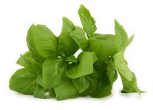 Fresh green basil leaves Stock Image