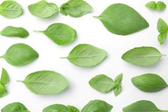 Fresh green basil leaves on white background. Top view Royalty Free Stock Photo