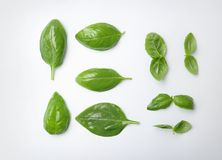 Fresh green basil leaves on white background. Top view Stock Photography