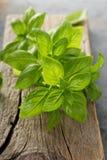Fresh green basil leaves Royalty Free Stock Photos