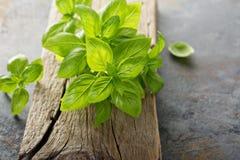 Fresh green basil leaves Stock Image