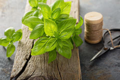 Fresh green basil leaves Royalty Free Stock Images
