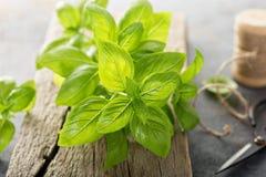 Fresh green basil leaves Stock Photo