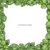 Fresh Green Basil Square Frame. Traced vector, Fresh Green Basil Square Frame stock illustration