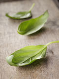 Fresh green basil top leaves Stock Images