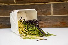 Fresh Green Bean. A pile of freshly picked green beans spilling out of a plastic bucket Royalty Free Stock Photo