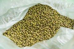 Fresh green beans Stock Images