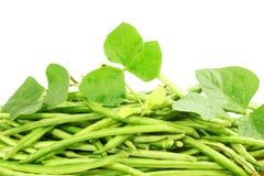Fresh green  Black eye peas beans with plant Stock Image