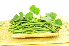 Fresh green  Black eye peas beans with plant Stock Photography