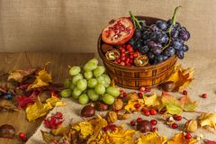 Fresh green and black grapes in a basket still life with autumn leaves. Royalty Free Stock Image