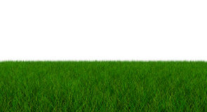 Fresh Green Blade of Grass - Isolated On White Background - 3D I. Llustration Stock Photo