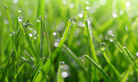 Fresh green blades of grass with dew drops. Closeup Stock Photo