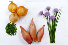 Fresh green blooming chives, shallots and yellow onion. On olive wood background Royalty Free Stock Photography
