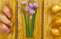 Fresh green blooming chives, shallots and yellow onion. On olive wood background Stock Image