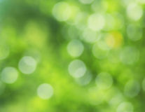 Fresh green blur background Stock Photography