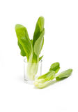 Fresh Green Bok Choi. Royalty Free Stock Photography