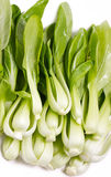 Fresh Green Bok Choi. Royalty Free Stock Images