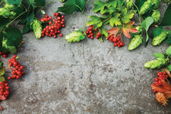 Fresh green branches of hop and red berries of viburnum. Fresh green autumn branches of hop and red berries of viburnum on concrete background. Top view. Free Royalty Free Stock Photos