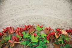 Fresh green branches of red viburnum on sand background Stock Images