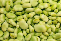 Fresh green broad beans. Group of fresh green broad beans healthy Stock Photography