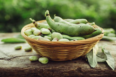 Fresh green broad beans. In the open air. Healthy food. Natural light Royalty Free Stock Image