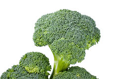 Fresh green broccoli Stock Photography