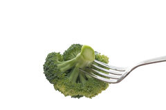 Fresh green Broccoli Stock Image