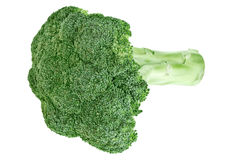 Fresh green broccoli cabbage head with stalk Royalty Free Stock Photos