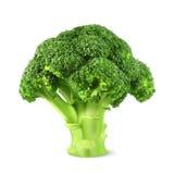 Fresh green broccoli. Vector illustration, on white background royalty free illustration